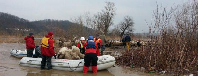 Gradačački ronioci spašavali ovce i pastire