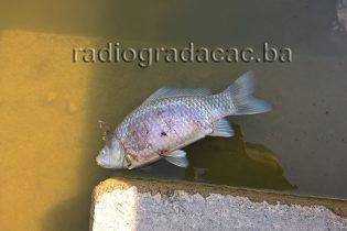 Šta se dešava sa ribom u jezeru Hazna?