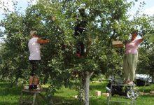 Prezentacije u okviru Sajma šljive, Sukobi procedura otežavaju izvoz voća i povrća