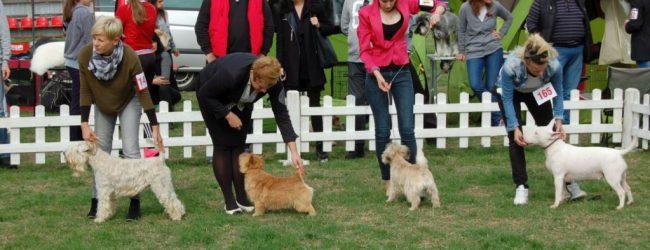 FOTO: Gradačac dog show 2017