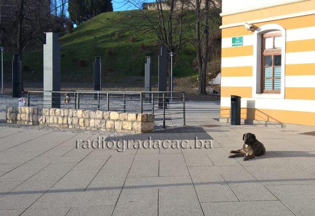 Grad Gradačac: Javni oglas – zakup zemljišta i objekata radi zbrinjavanja pasa lutalica