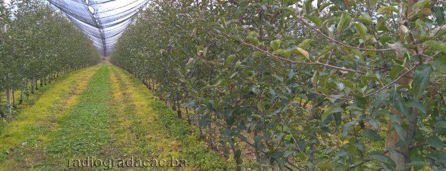 Počela isplata poticaja poljoprivrednicima u Tuzlanskom kantonu