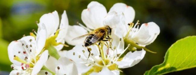 Ažuriranje podataka u Registru pčelara i pčelinjaka