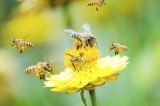 Sutra počinje 4. Međunarodni sajam pčelarstva u Gradačcu