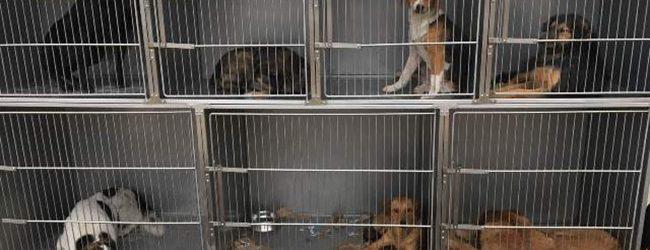 Počele aktivnosti na hvatanju napuštenih pasa u Gradačcu