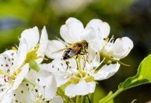 Danas i sutra 3. sajam pčelarstva u Gradačcu