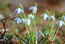 Danas je prvi dan proljeća – Servisne informacije za 20.03.2021.