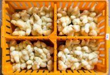 Poljovet godišnje proizvodi 8 miliona jednodnevnih pilića za uzgoj brojlera