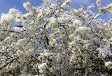 Da li će snijeg i mraz imati posljedice na ovogodišnju poljoprivrednu proizvodnju?