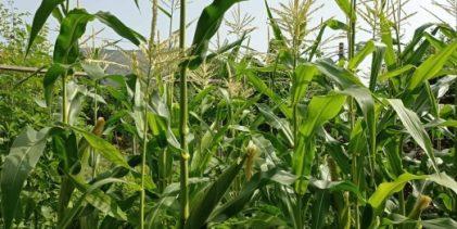 Poziv poljoprivrednim proizvođačima da izvrše prijavu poljoprivredne proizvodnje
