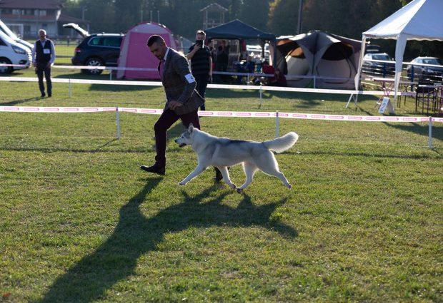 Sibirski haski vlasnice Gabriele Holo iz Mađarske pobjednik izložbe pasa u Gradačcu